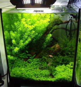 "Нано-аквариум ""Aquael"" (пр-во Польша) с 3D-фоном"