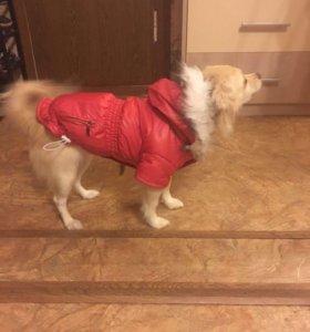 Пальто для собаки с капюшоном утеплённое