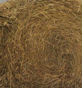 Солома пшеничная.