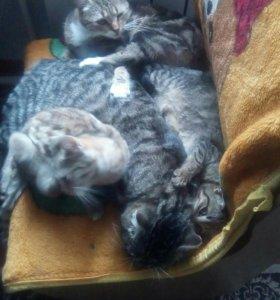 Два котенка, девочка и мальчик.