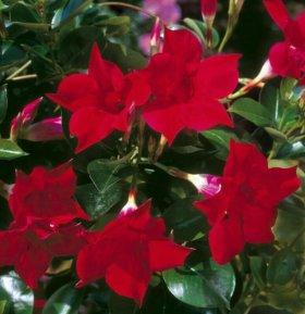Дипладения шикарная с бархатными цветами