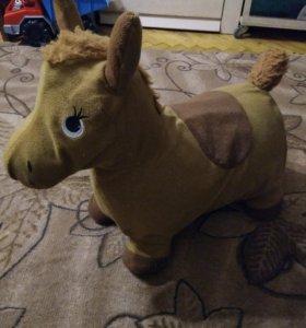Прыгунок лошадка