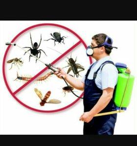 Уничтожение клопов,тараканов