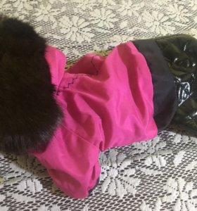 Одежда для собак 🐕