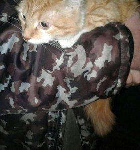 Кошечка 7 месяцев