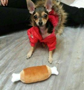 Продажа щенков