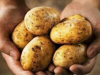 Картофель  50р куль