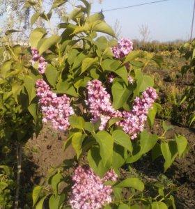 Орех грецкий и огромный выбор растений