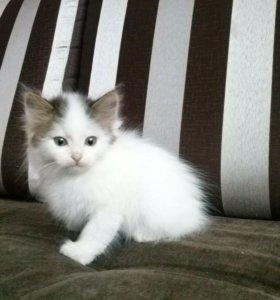 Котята даром с доставкой на дом