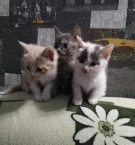 Отдам симпатичных котят
