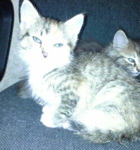 Очаровашки котятки