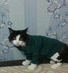 Одежда для котов и собачек