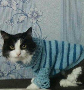 Одежда для собачек и кошек