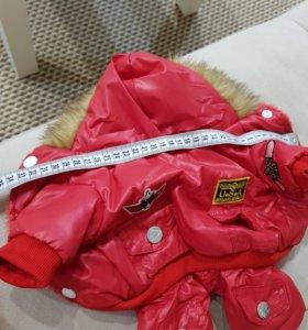 Зимний костюм для маленькой собаки
