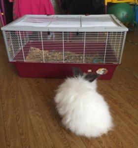 Кролик лисий породы,с клеткой.