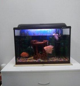 Аквариум 72л. с чудесными рыбками