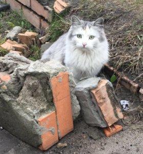 Невероятной красоты котик хочет домой