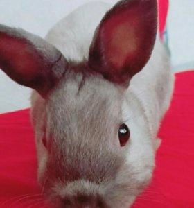 Кролик. Самэц. Вязка