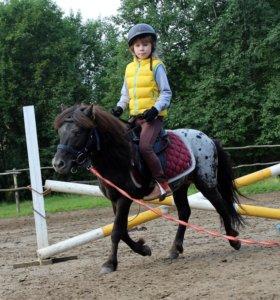 """Верховая езда, обучение, конный клуб """" Тандем"""""""