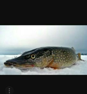 Свежая рыба речная
