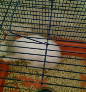 Продам кролика вмести  с клеткой