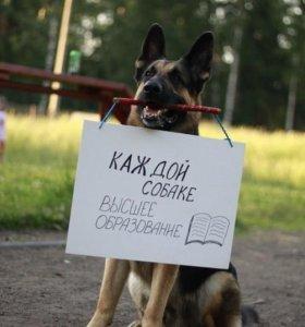 Дрессировка собак любой породы!
