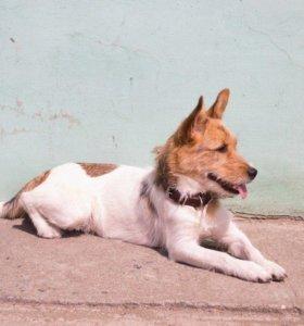 Собака Умка