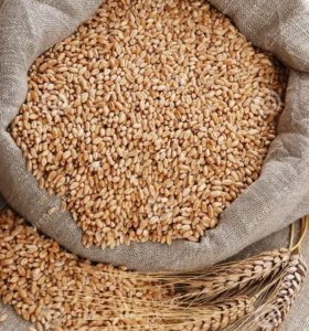 Ячмень, пшеница в мешках