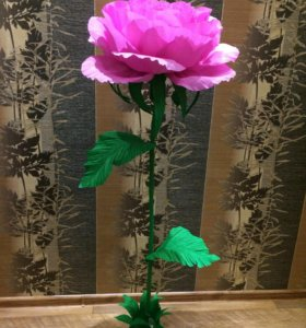 Интерьерная роза в горшке
