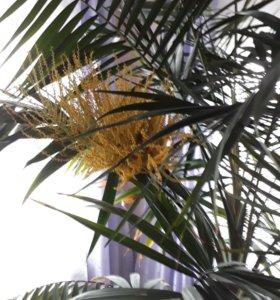 Большой цветок:пальма  1,80см