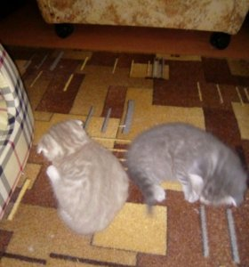 Детки котятки