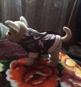 Игрушка собака чихуахуа Хуа ( ЧичиЛав)