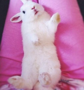 Кролик для фотосессии
