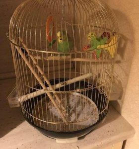 Волнистый попугайчик+клетка