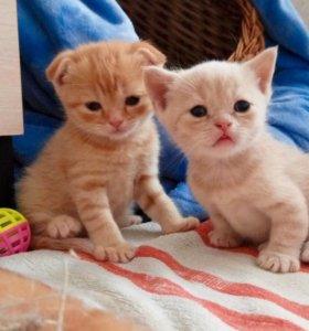 Очаровательные малыши