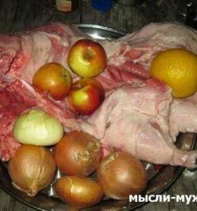 Мясо бобра