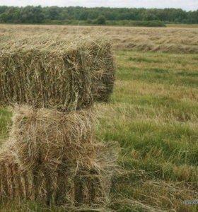 Сено в брикете пшеница ячмень в мешках