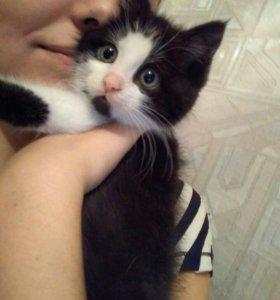 Пушистый котенок в добрые руки