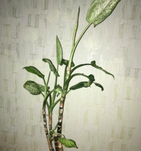 Цветок 80 см