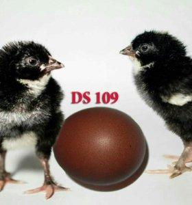 Свободное яйцо на 20 декабря