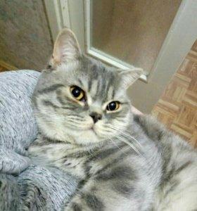Ласковый котик