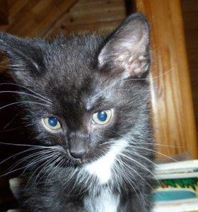 Черный кот - удача в дом.