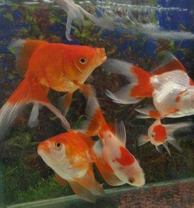 Клетки, лежанки, рыбки