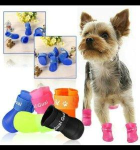 Обувь новая для любимой собачки