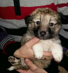 Милый щенок девочка в добрые руки