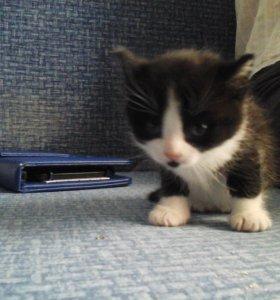 Котята 4 штуки отдам даром