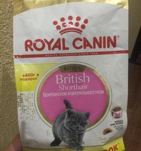 Корм Royal Canin для котят Британцев
