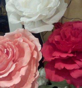 Роза великан