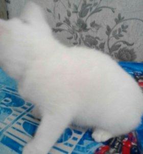 Белая кошечка три месяца