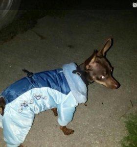 Костюм зимний для собаки
